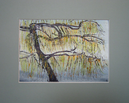 Spring Willow Woodcut